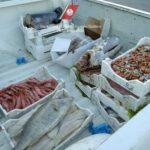 Porto Empedocle. Sequestro di circa 193kg di prodotti ittici e sanzioni amministrative pari a € 22.256,00