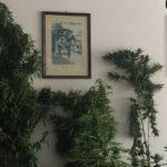 Blitz all'interno di un'abitazione a Canicattì (Ag).      In manette un trentenne che coltivava la marijuana nel giardino di casa.