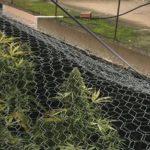 """Blitz all'interno di un'abitazione a Ravanusa (Ag). Scovata una mini piantagione di """"Marijuana""""."""