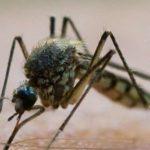 Un caso di malaria a Firenze. L'allerta pubblicata sulla rivista Eurosurveillance