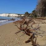 """MareAmico. """"Ad Eraclea Minoa l'erosione ha aggredito la spiaggia, le sue dune d il boschetto"""""""