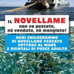 """Agrigento.  MareAmico: """"Da oggi è nuovamente vietata la pesca del novellame"""""""