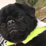 Cagnolino smarrito nei pressi Zona Industriale: i proprietari chiedono aiuto per ritrovare Bruno