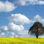 Favara. Un albero per ogni neonato. Dove sono i 2000 alberi dei bambini nati e adottati?