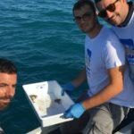 Porto Empedocle. Liberato in mare esemplari di Tartaruga marina intrappolate sotto la sabbia