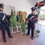 Piantagione di marijuana a Ribera: un arresto.