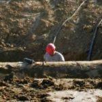 Guasto condotta acquedotto Voltano nel territorio di Santa Elisabetta