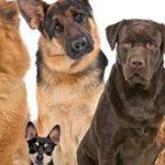 """Domenica presso il Centro Commerciale Città dei Templi """"DogFest"""" un viaggio per crescere insieme, uomini e animali"""
