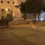 Favara. Piazza Cavour. I lavori di ripristino del manto stradale ed i cani randagi di sera, stanno massacrando l'economia degli esercenti.