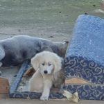 Esche avvelenate? strage di cani a Zingarello