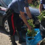 In riva al mare trovata una piantagione di cannabis: un arresto a Licata