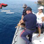Tartaruga caretta caretta soccorsa dalla motovedetta dei Carabinieri